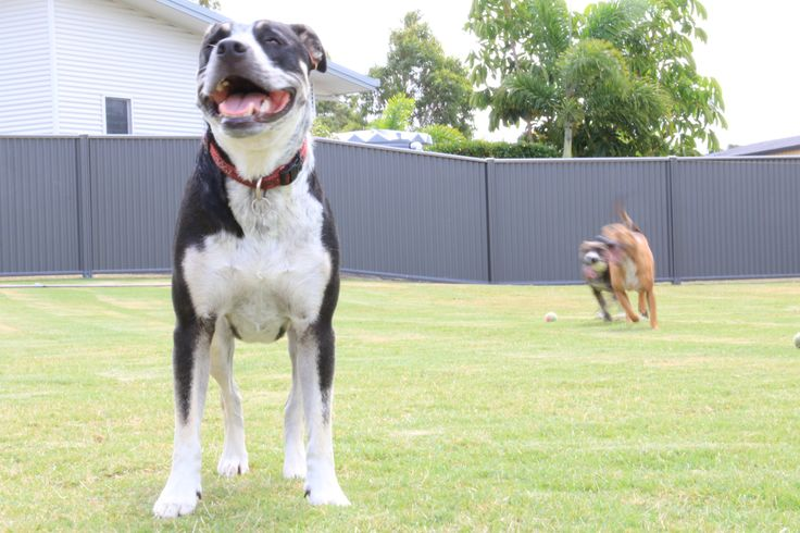 L1M2AP2 Blurred Motion, sharp background - Roxi, Mia and Digby- Semi-Automatic,no flash, Handheld taken with a Canon EOS70D, ISO-400, f/32, 1/15 sec. Taken early afternoon on a cloudy day