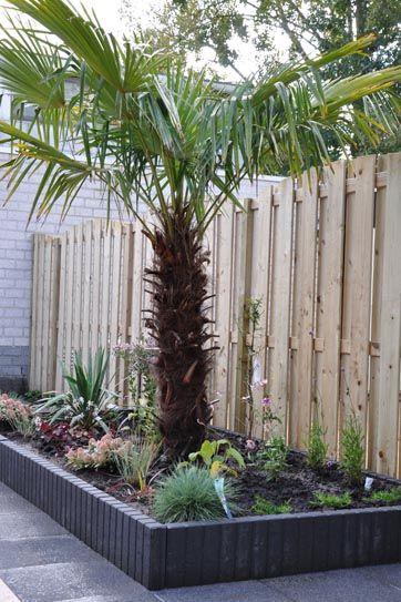de palmboom past bij de mediterrane tuinen