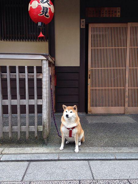 161227_japanese_dogs_02.jpg