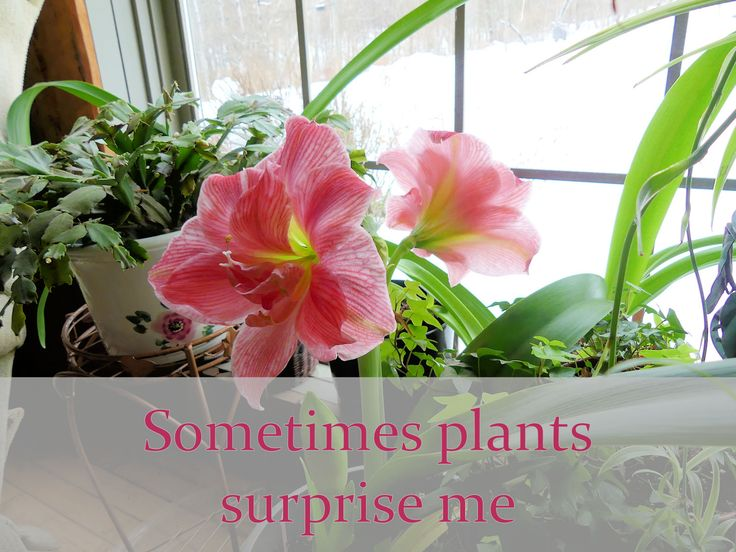 Sometimes Plants Surprise Me: Garden Bloggers Bloom Day February 2017