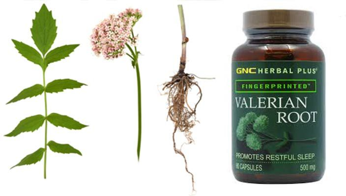 Valerian Root Tea – How to Make Recipe, Benefits, Dosage, Effects ...