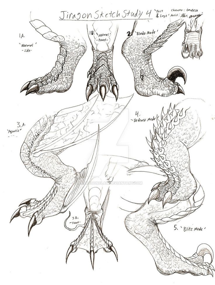 jiragon_foot_and_leg_sketches_by_rendragonclaw-d243tk1.jpg (JPEG Image, 777×1028 pixels)