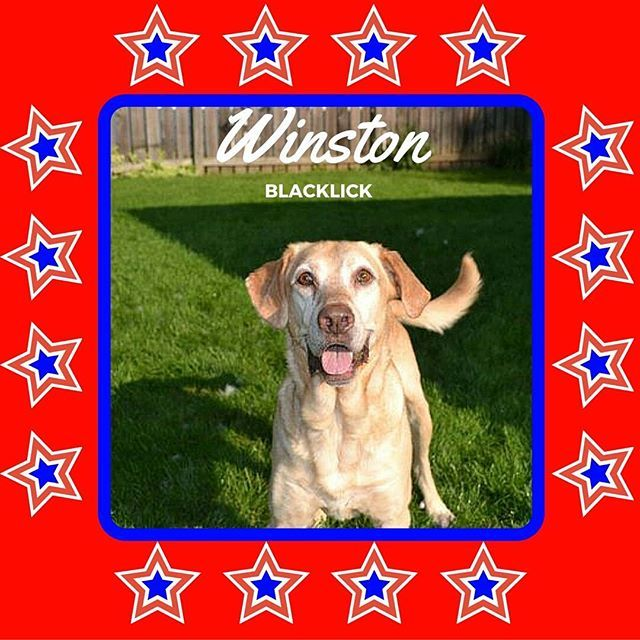 Happy 4th of July! Meet Winston from our Columbus office! #DogsofMHE #puppy #dogs #dogsofinstagram #dogstagram #pupper #DogDaysofSummer