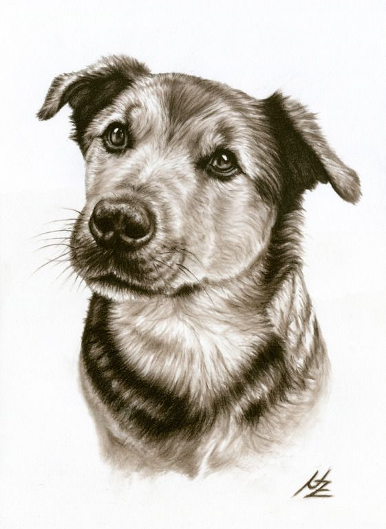 "Saatchi Online Artist: Nicole Zeug; Charcoal, Drawing ""Dogs Eyes"""