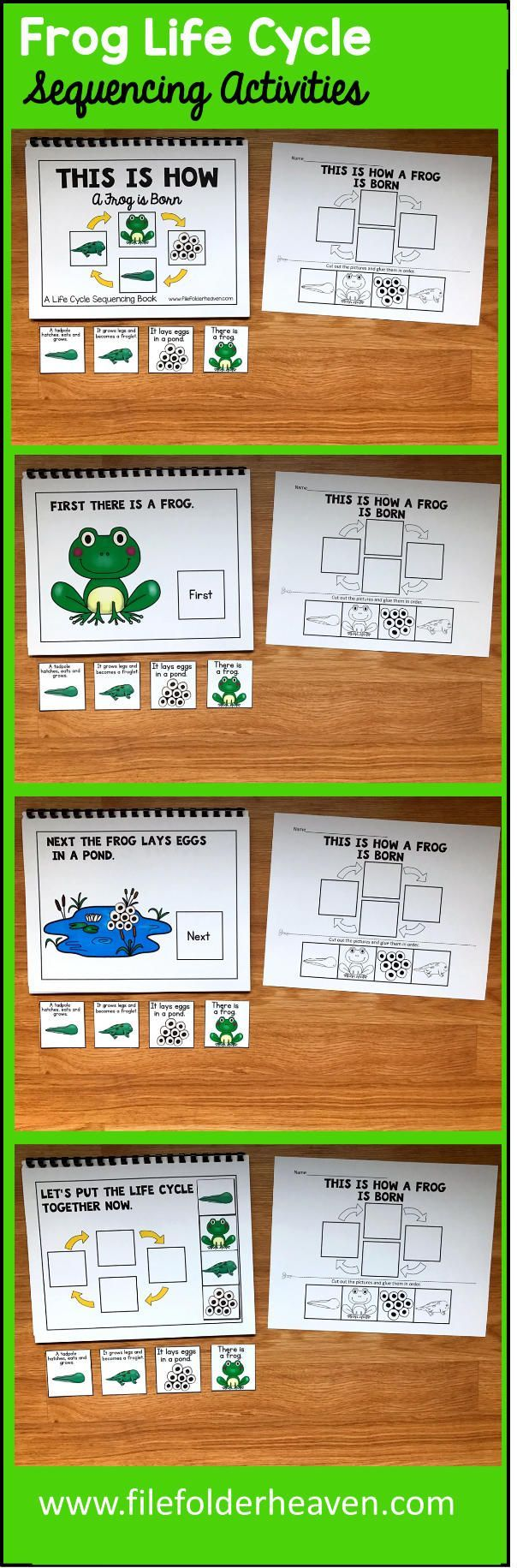 These Frog Life Cycle Sequencing Activities include 1 Adapted Book and 1 accompanying worksheet. The Frog Life Cycle Adapted Book teaches a simple 4 step life cycle for the frog, includes hands-on interaction with the text, and reinforces sequencing skills.  Adapted Book Included:    This Is How a Frog is Born  The teacher or therapist reads book as students follow along, matching each step of the life cycle on each page