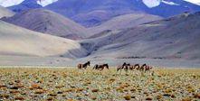 Leh trip | Leh tour packages | Leh holiday packages | Leh ladakh tour packages