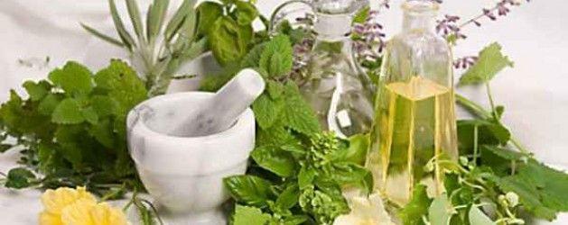 Las 230 Plantas medicinales y sus usos para la salud | La Bioguía