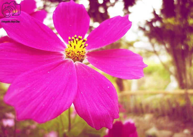 Flor Violeta By: ¡¡ Alejo Diaz !!