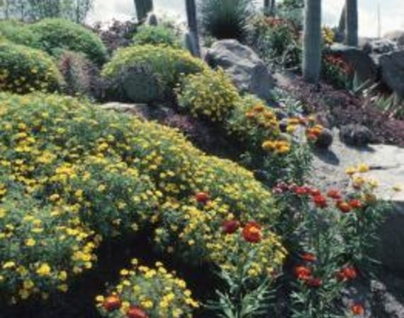 Landscaping ideas for downward sloping backyard