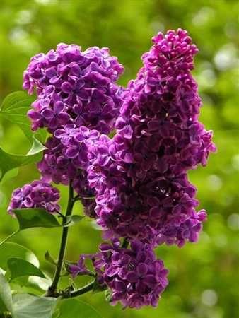 My favorite flower!
