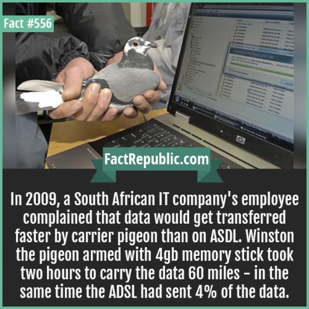 Way to go Winston the pigeon, you have officially beaten the computer system