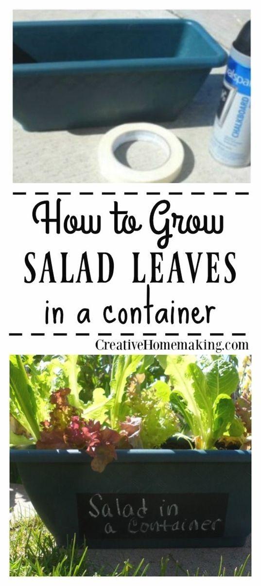 Wie beginne ich einen kleinen Gemüsegarten für Anfänger #vegetablegardening #…