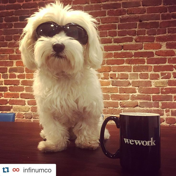 Rockin' WeWork swag at SOMA. From @infinumco #dogsofWeWork
