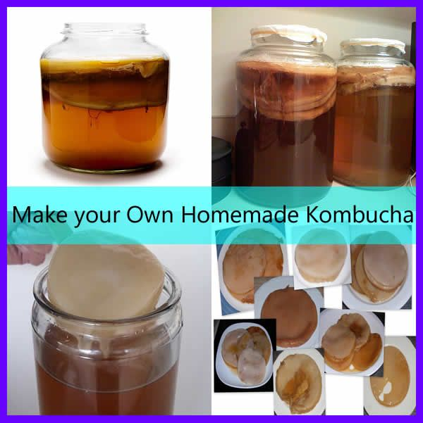 Make your own Homemade Kombucha - Kombucha is a fermented drink made from sweetened black tea.  It has been known that kombucha helps promote good health by improving our digestive system as well as our detoxification system that causes for our immune system to boost.