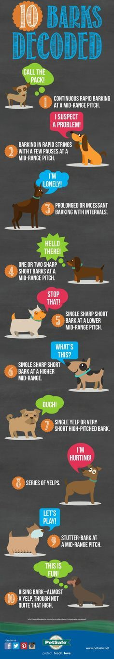 How To Decode Your Dog's Different Barks