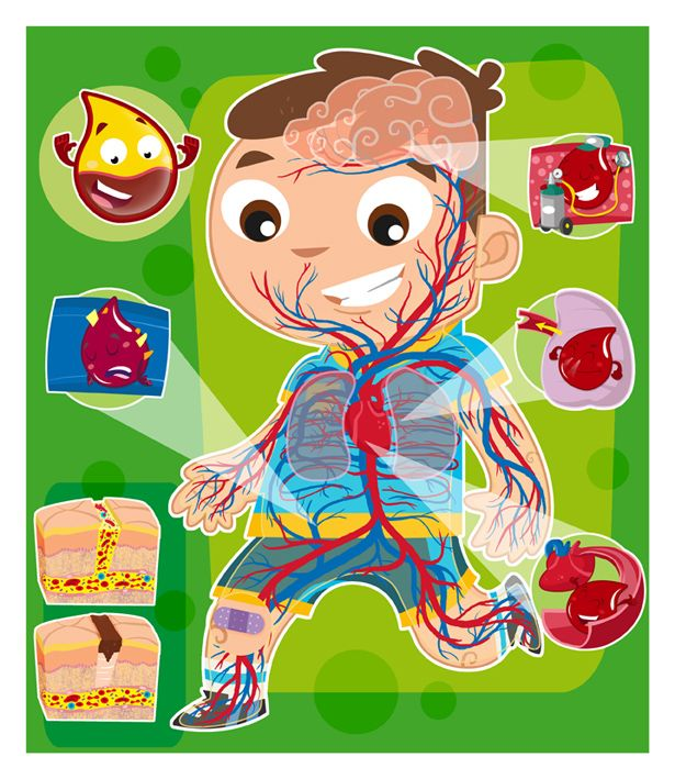 Sistema Circulatorio   Ciencia para jóvenes y niños   Pinterest