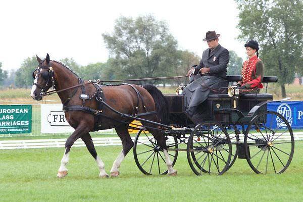 VOLTA - konie, jazda konna i jeździectwo