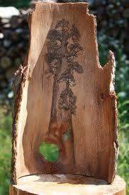 Liečivé účinky kôry stromov