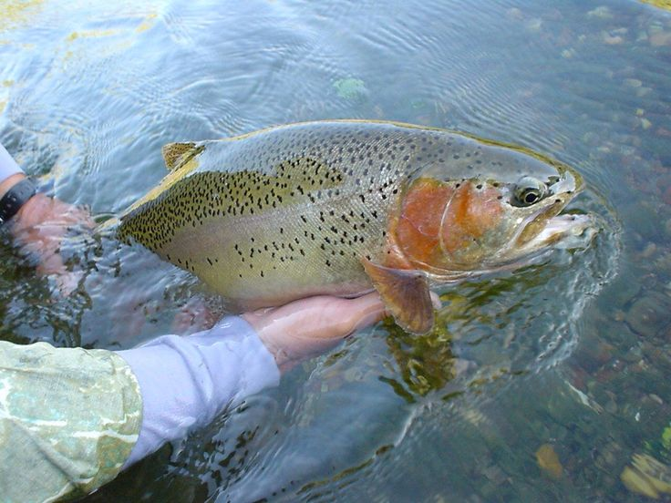 627 best images about fly fishing on pinterest montana for Best trout fishing in pa