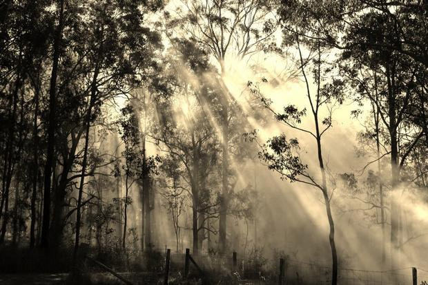 'Burning Sun' Australian bushland -by Joel Murray