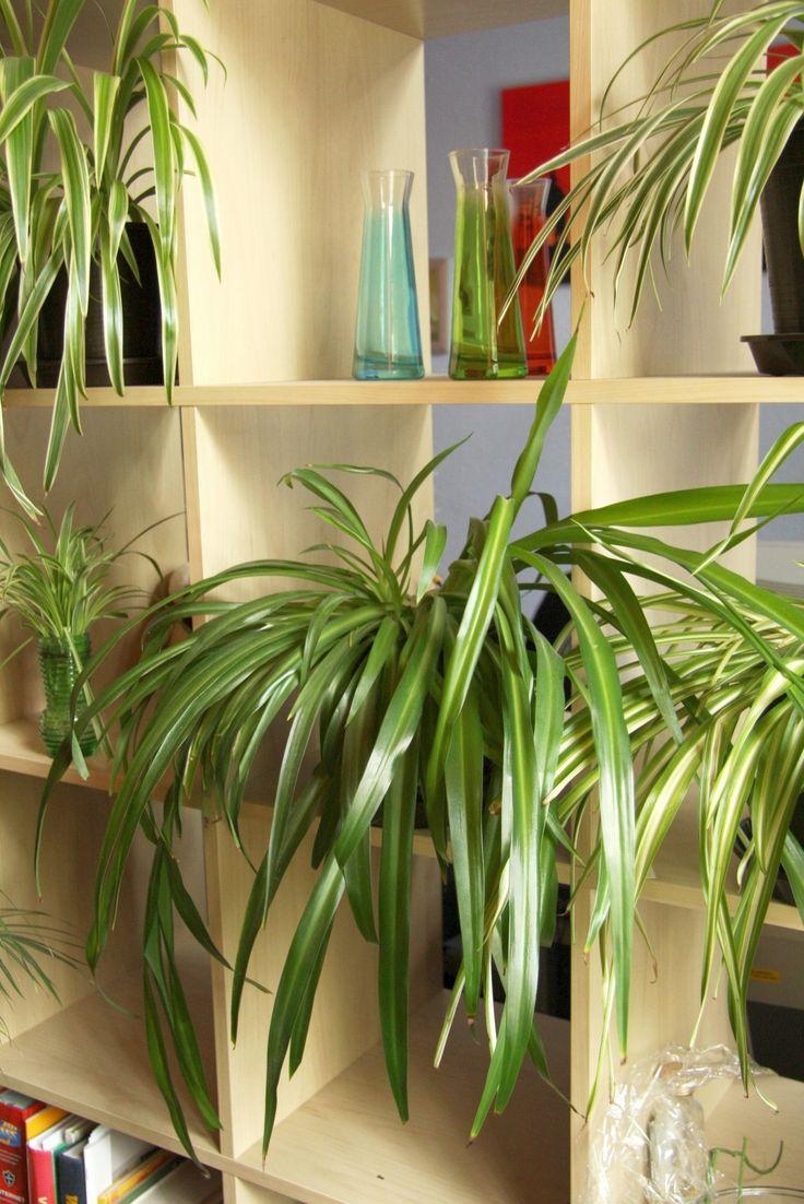 комнатные растения тенелюбивые с картинками деле, получите