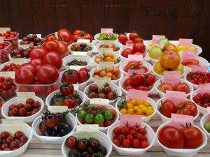 Mehr als 1000 eingetragene Sorten von Tomaten.