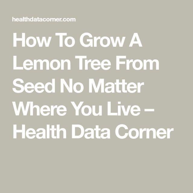 Best 25 lemon tree plants ideas on pinterest lemon for Can i grow a lemon tree from lemon seeds