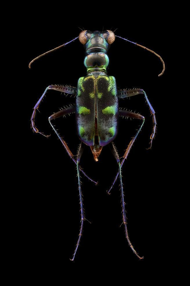 Best Microsculpture Images On Pinterest Insects Salems Lot - Each of these macro bug photographs is made from thousands of individual images