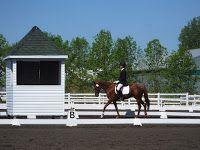 cheval de saut d'obstacle