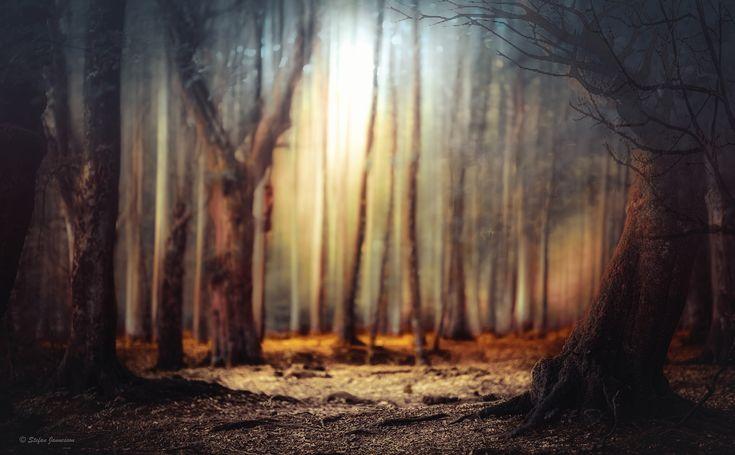 https://flic.kr/p/C3BU3n | Space in a forest