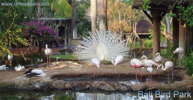 Bali Bird Park - Batu Bulan Village Ubud Bali
