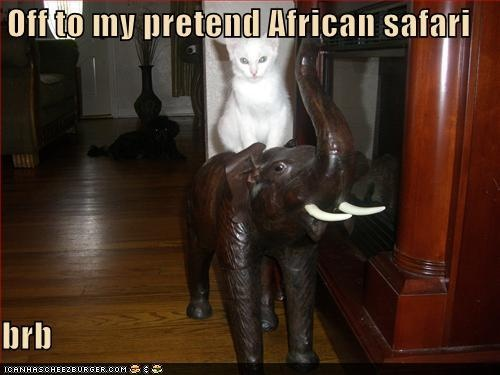 LOL    #cats #cute #adorable #sweetI Love Cats, Art Favorite Cat Pictures, African Safari, Lol Cats, Funny, Safari Cat, Kitter, Adventure Cat, Animal