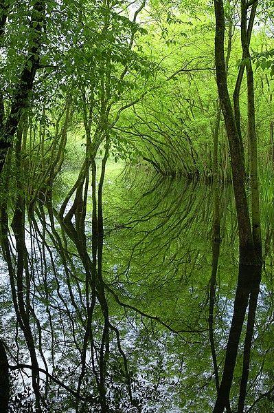 Parco del Delta del Po dell'Emilia-Romagna
