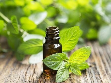 Do you have a need for a strong, minty smell in your application? #nessentials_australia's Peppermint Essential Oil is for you. With a cool minty aroma, our #pure and #natural Peppermint Essential Oil will provide you with a fresh minty experience. To try yours today, visit here: http://bit.ly/2apo0pS
