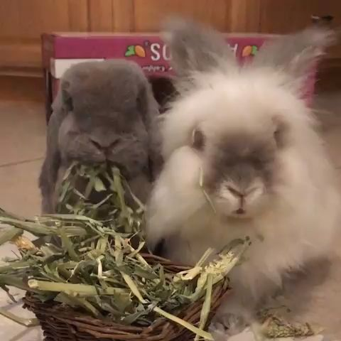 8 Things You Do That Upsets Your Bunny!