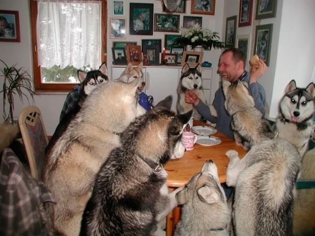 A husky dinner party that's gone on until the wee hours of the morning.
