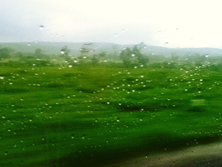 Green always good.. And its raining outside