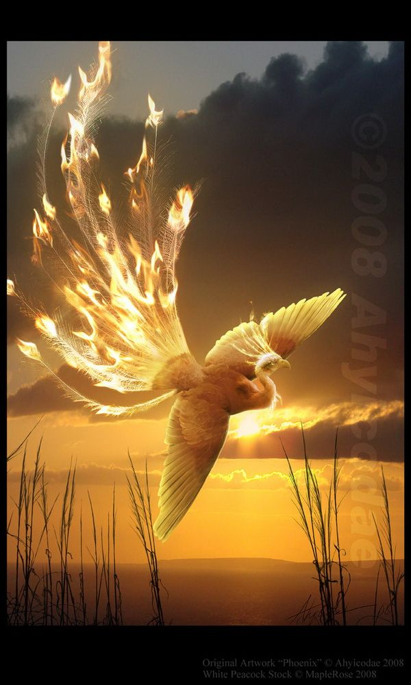 Mythical phoenix bird. I love how it actually looks like it's on fire.