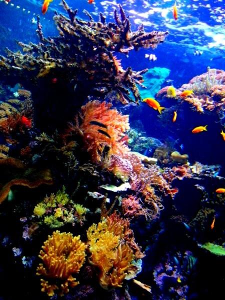 In fondo al mar... acquario di Genova