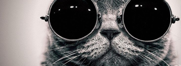 Cool Cat Facebook Cover Photo - Best Photos' Store