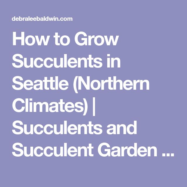 How to Grow Succulents in Seattle (Northern Climates) | Succulents and Succulent Garden Design | Debra Lee Baldwin