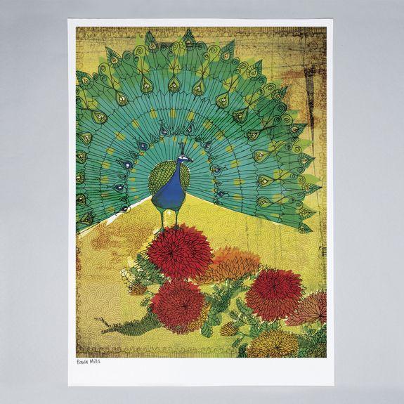 Sweet William - Peacock Instinct - Print