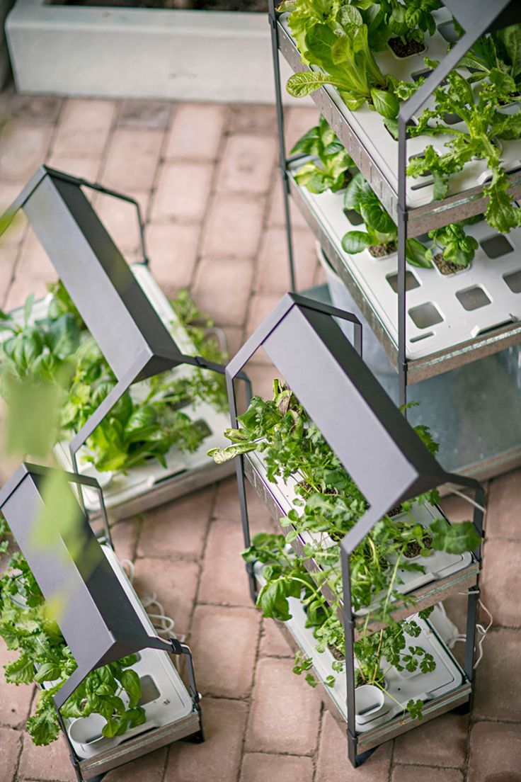 Mit dem neuenHydrokultursystem Krydda/Växer bringt Ikea speziell entwickelte Produkte zumAnbauen von Pflanzen in Wasser ohne Erde. Mit zugesetzten Nährstoffen und dem richtigen Licht ermöglicht die Hydrokultur das Gärtnern auf kleinem Raum. Mit einer neuen Seriean Produkten für das Heimgärtnern mit … Weiterlesen