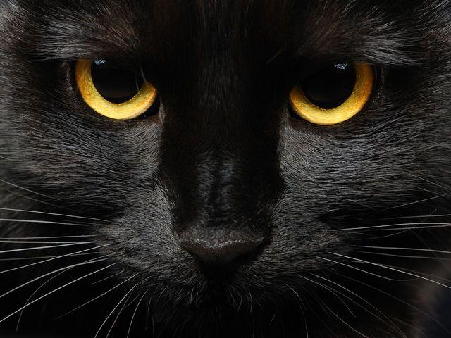 I got: Black Cat! What's Your Halloween Spirit Animal?