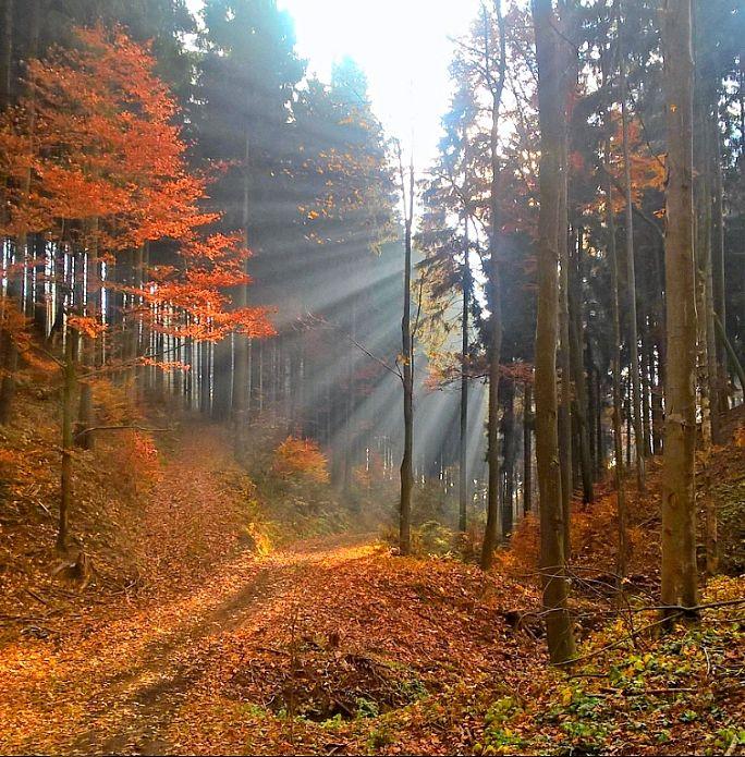 Autumn forest, Veselá u Semil