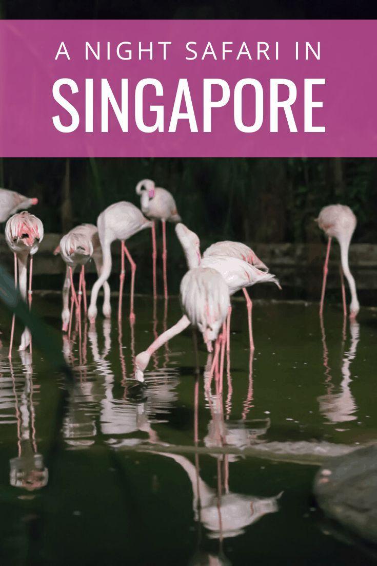 Singapore Night Safari Good Idea Singapore Travel Singapore Zoo Asia Travel