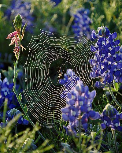 Spider web &sunlight