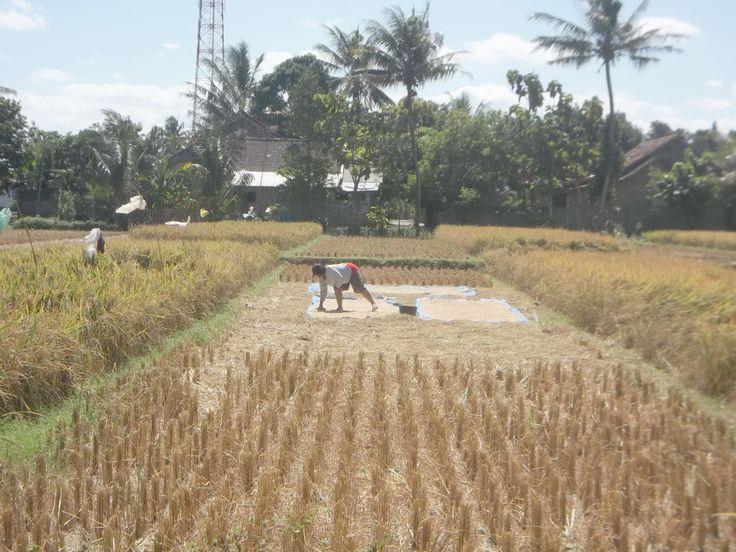 Masahan Village, Bantul-jogjakarta