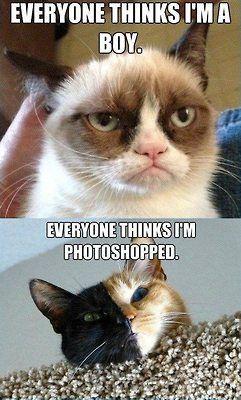 Poor girls! Tarder Sauce (AKA: Grumpy Cat) and Venus (AKA: the Chimera Cat)