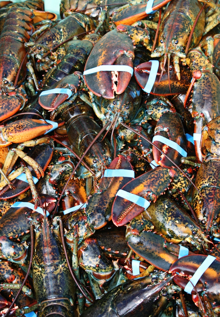 Miminegash Lobster, Prince Edward Island - A picture I took of my dad's catch of the day!